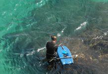 Matosinhos reforça educação ambiental ligada ao mar