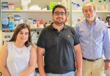 Investigadores do ITQB descobrem como bactéria Clostridium difficile sobrevive ao oxigénio