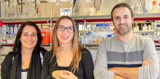 Fungos aumentam capacidade de infeção em contacto com poluentes