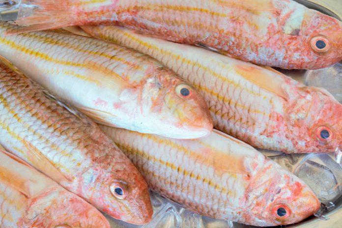 Apoio às Pescas e aquicultura com linhas de crédito estatais de 20 milhões de euros