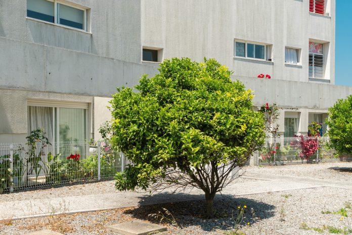 Habitação social em Matosinhos tem novos postos de atendimento