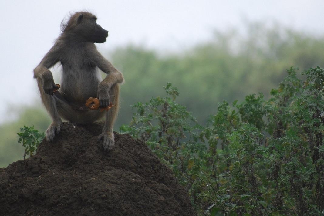 Parque Nacional da Gorongosa, em Moçambique