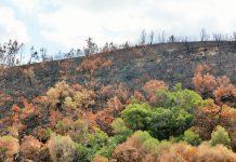 Apoio ao restabelecimento florestal com candidaturas até meio de abril