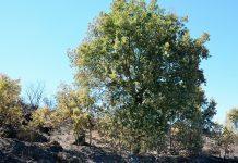Equipas de sapadores florestais podem receber 40 mil euros de apoio por ano