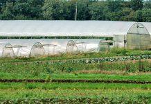 Mil milhões de euros de crédito para jovens agricultores europeus