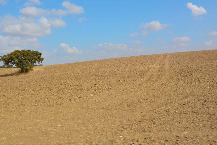 Perda de biodiversidade preocupa europeus