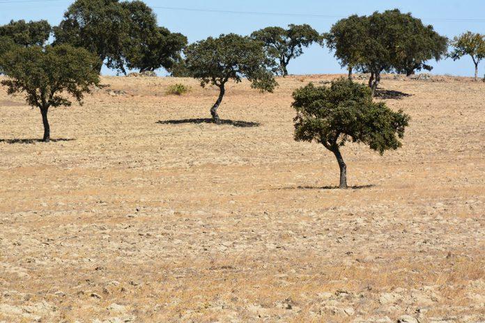 Agricultores alentejanos pedem apoio de combate à seca