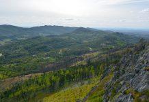 Eucalipto ocupa 26% da área florestal de Portugal continental