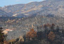 Incêndios rurais: Até 15 de agosto foram menos 43% face aos últimos 10 anos