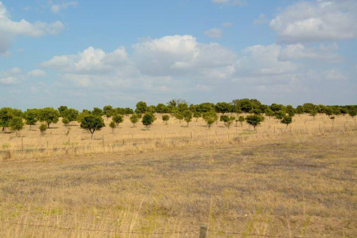 Agricultura sustentável em risco com o fim dos apoios às medidas agroambientais