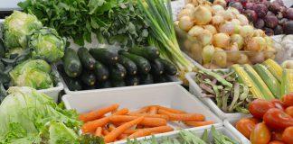 Dieta rica em vegetais reduz fadiga em pacientes com Esclerose Múltipla