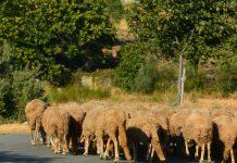 Auxílio nacional aos agricultores pode ir até 25 mil euros