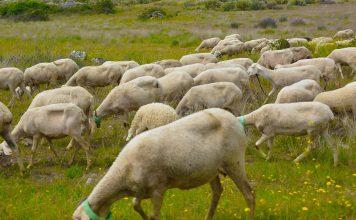 Ovibeja de 2020 vai reforçar conhecimento sobre a agricultura e o mundo rural
