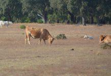 União Europeia apoia agricultores afetados pela seca