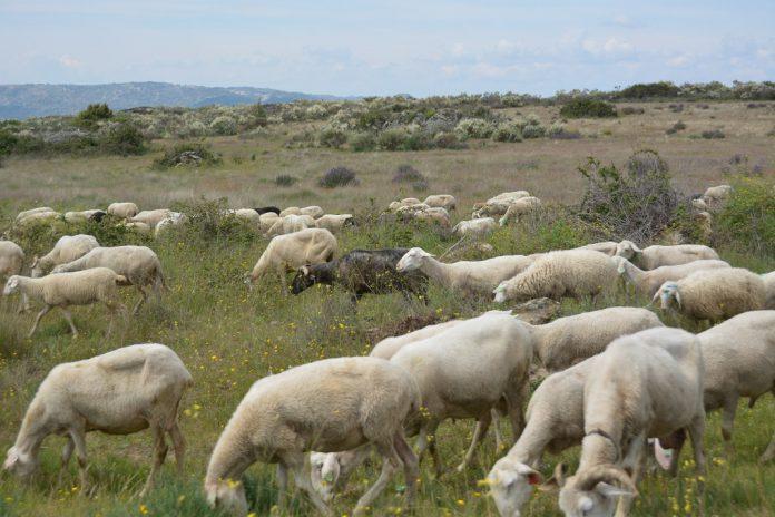 Ministro da Agricultura apela aos pastores para não realizarem queimadas