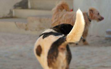 Reduzir interações humanas com animais para diminuir riscos de pandemias