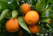 Especialistas debatem em Faro a fruticultura e nova geração de agricultores