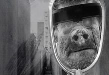 """Teatro Municipal de Matosinhos-Constantino Nery leva ao palco, a 9 de fevereiro, pelas 21h30, o """"2084: O Triunfo sobre os Porcos"""". Uma peça que pretende refletir sobre o mundo e a tecnologia."""