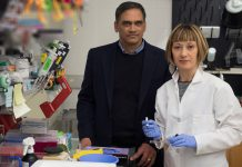 Descoberta inesperada indica para novo tratamento da artrite reumatoide