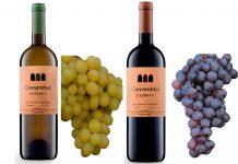 Adega de Portalegre Winery leva vinhos portugueses à Prowein na Alemanha