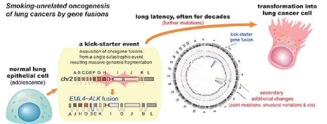 Cancro do Pulmão em não fumador pode vir de rearranjo genético precoce