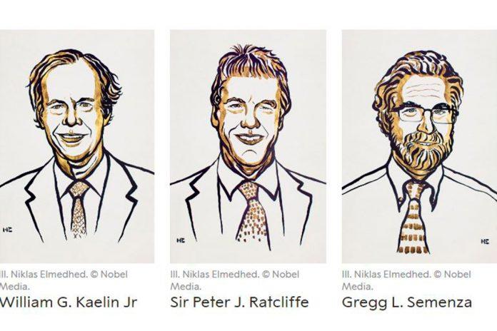 Prémio Nobel de 2019 em medicina para William G. Kaelin Jr., Peter J. Ratcliffe e Gregg L. Semenza