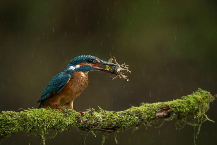 Prémios de Fotografia em História Natural e Ciência distinguem quatro fotógrafos
