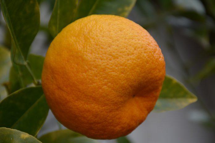 Mercado da Colômbia aberto aos fruticultores portugueses