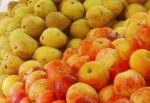 Peras e maçãs portuguesas já podem ser exportadas para a Indonésia