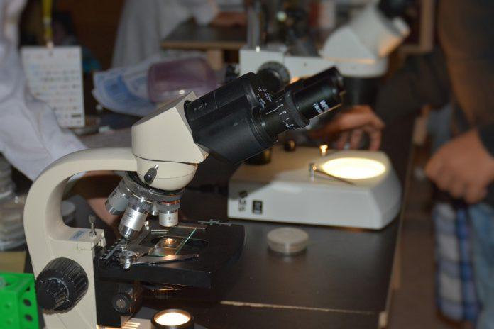 Alunos de Ovar e de Braga vencem Mostra Nacional de Ciência