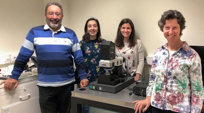 Cancro: Estudo da Universidade de Coimbra distinguido por Laboratório do Reino Unido