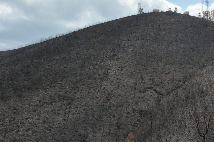Castro Daire com 140 hectares queimados para renovação de pastagens