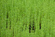 """""""Agroambientais sem glifosato/herbicidas"""" - uma campanha por melhores práticas agrícolas"""