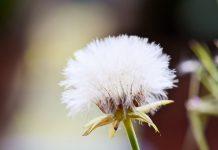 Um terço dos portugueses sofre de alergias e um risco para COVID -19 grave