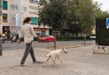 Coabitar com cães e receber bens no domicílio são fatores de risco de COVID-19