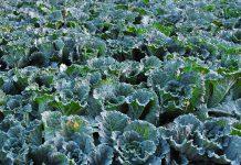 Comissão Europeia quer impulsionar agricultura biológica