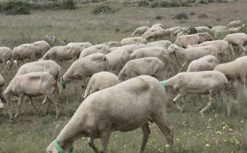 Vacinação animal com apoio financeiro do Município de Bragança