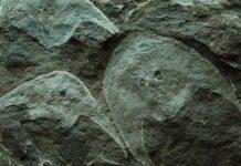 Os 40 anos da Área Arqueológica do Freixo e os 30 da Escola Profissional de Arqueologia