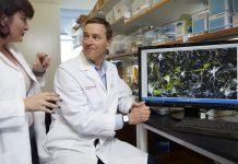 Doença de Parkinson pode ter início antes da pessoa nascer