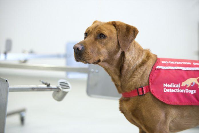 Cães podem detetar pessoas com COVID-19