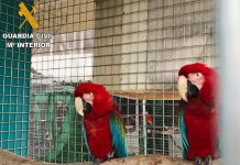 Presos em Espanha 28 traficantes de aves exóticas