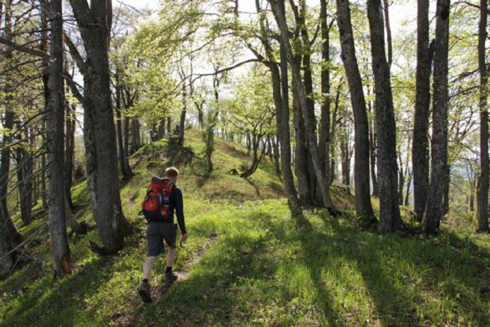 Florestas antigas da Europa estão em risco
