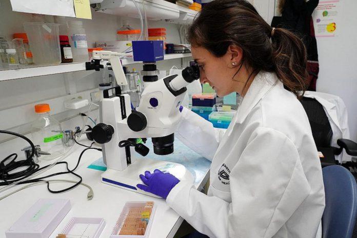 EUA, UE e farmacêuticas lançam parceria para acelerar medicamentos e vacina COVID-19