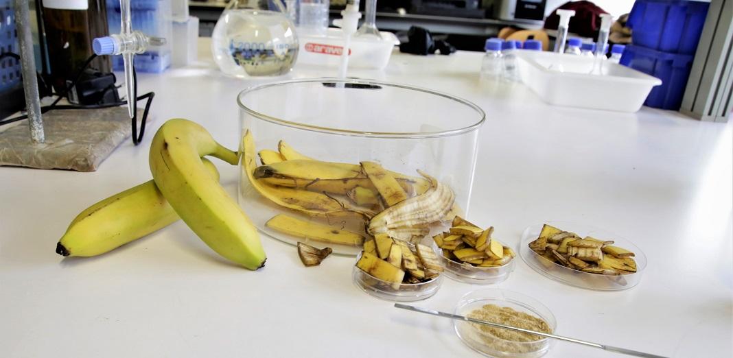 Cascas de banana retiram mercúrio e outros metais pesados das águas.