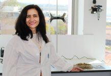 Biosílica extraída da cana-de-açúcar resulta de investigação portuguesa