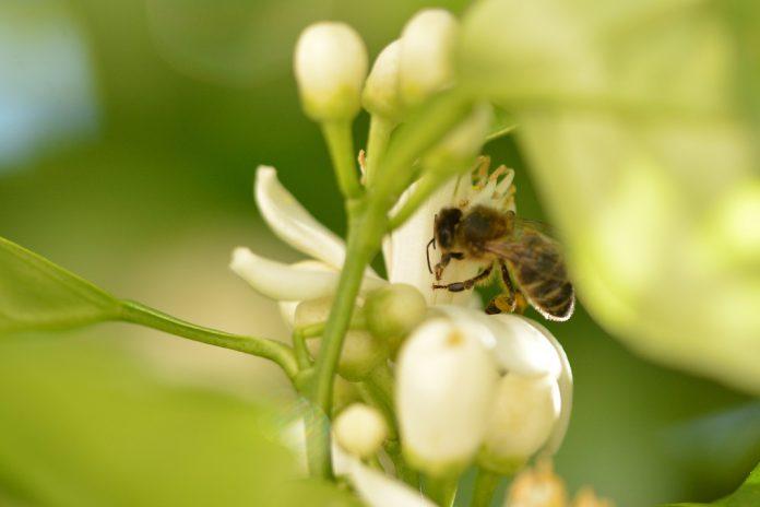 Relatório de eurodeputados exige metas para proteção da biodiversidade