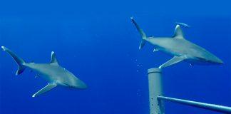 Reino Unido cria maior rede de câmaras subaquáticas do mundo