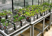 Plantas em laboratório